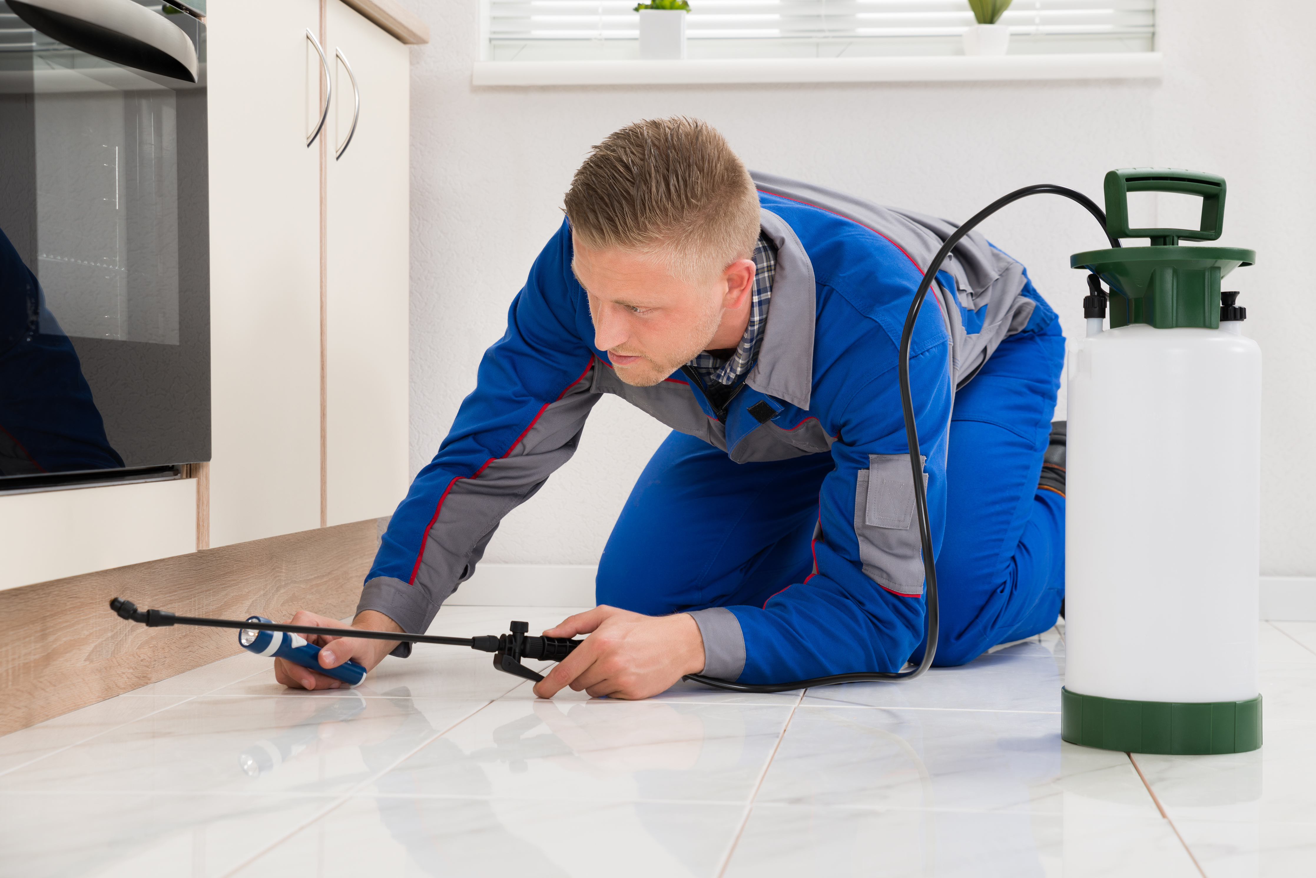 Tips to Control Pest in Home